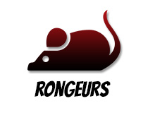 Animalerie ABC - rongeurs